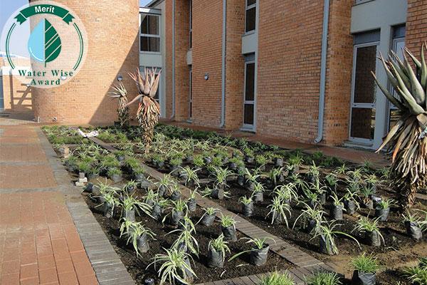 Rothe Plantscapers <br/>for<br/> Sasol Brandspruit Living Quarters - Block 5