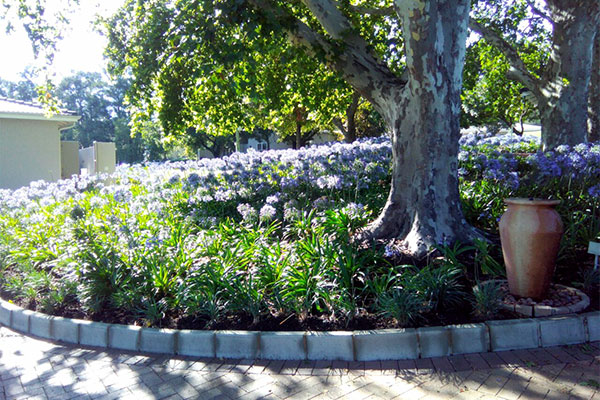 ervest Landscaping & Turf, a division of Servest Pty Ltd <br/>for<br/> Bryanston Country Club