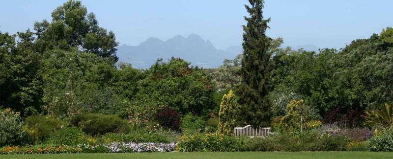 Water wise gardening with trees & large shrubs